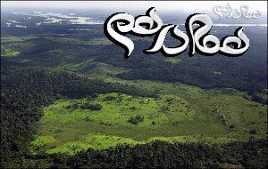 دانسنی هایی در مورد جنگل آمازون