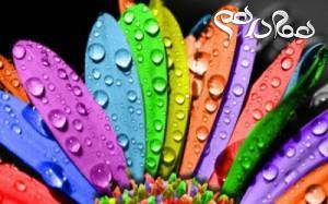 آرامش را با رنگ ها به ارمغان آورید
