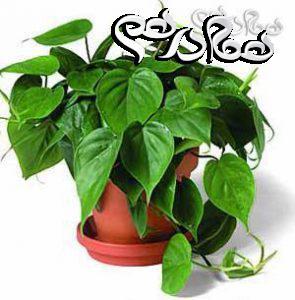 برخی از نشانه های بیماری در گیاهان آپارتمانی