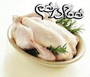ویژگی های مرغ سالم را بدانید