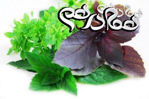 نحوه کاشت و برداشت سبزیجات در خانه